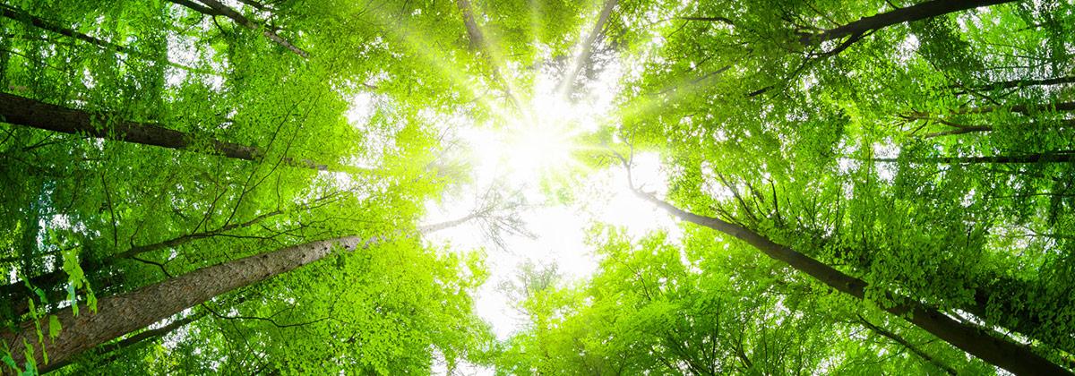 Protection du climat à Lascana